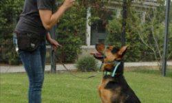 Le Certificat de Capacité d'éducateur canin