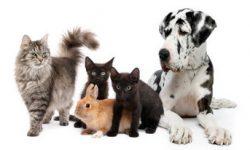 Les certificats permettant de travailler avec les animaux