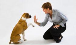 Comment devenir éducateur canin par correspondance ?