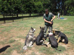 Comment devenir leveur canin par correspondance Jardinerie par correspondance
