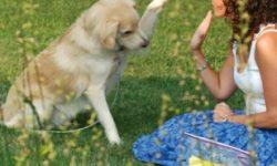 Educateur comportementaliste canin : métier et formation