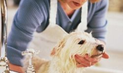 Certification de toiletteur canin